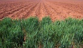 Campo de exploração agrícola arado Fotografia de Stock