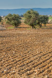 Campo de exploração agrícola arado Foto de Stock Royalty Free
