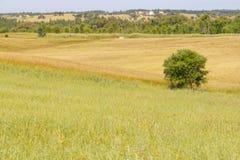Campo de exploração agrícola com plantação wheal e árvores no vale Seco, Santia Fotos de Stock