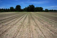 Campo de exploração agrícola da mola Foto de Stock