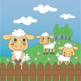 Campo de exploração agrícola dos carneiros Foto de Stock Royalty Free