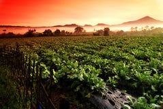 Campo de exploração agrícola na manhã Fotos de Stock Royalty Free