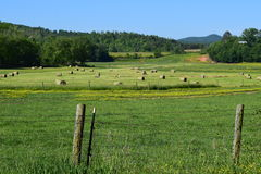 Campo de exploração agrícola ocidental do NC com rolos do feno e grama verde Fotografia de Stock