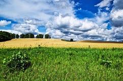 Campo de exploração agrícola pronto para a agricultura que colhe com céu azul e nuvem Foto de Stock Royalty Free