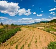 Campo de exploração agrícola seco Fotografia de Stock