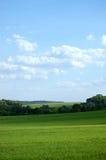 Campo de exploração agrícola verde Fotos de Stock