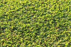 Campo de fútbol, hierba Imágenes de archivo libres de regalías