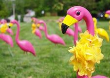 Campo de flamencos rosados Fotografía de archivo libre de regalías