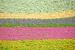 Campo de flor Imagem de Stock Royalty Free