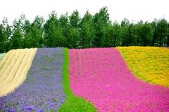 Campo de flor Imagens de Stock