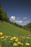 Campo de flor Imagen de archivo libre de regalías