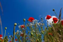 Campo de flor Imagen de archivo