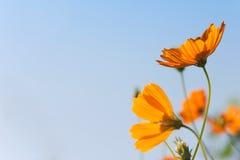 Campo de flor Foto de Stock Royalty Free