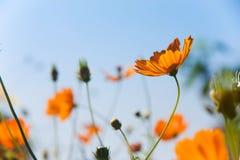 Campo de flor Fotografia de Stock