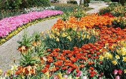 Campo de flor fotografia de stock royalty free