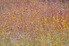 Campo de flor Fotografía de archivo libre de regalías