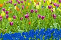 Campo de flor Imagenes de archivo