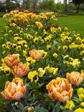 Campo de flor Imágenes de archivo libres de regalías