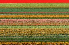 Campo de flor Foto de archivo libre de regalías