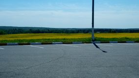 Campo de flor amarelo Imagens de Stock