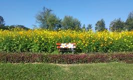 Campo de flor amarelo bonito com banco bonito Imagens de Stock Royalty Free