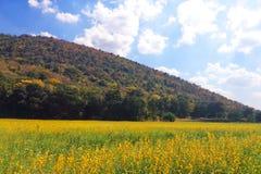 Campo de flor amarillo cerca de las colinas foto de archivo