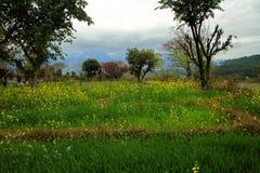 Campo de flor amarillo de la mostaza en un pueblo Fotografía de archivo libre de regalías