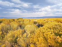 Campo de flor amarillo debajo del cielo azul de California Fotografía de archivo