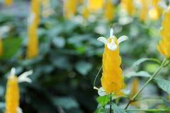 Campo de flor branca amarelo Fotografia de Stock