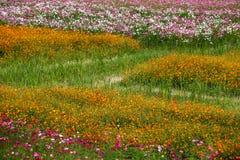 Campo de flor colorido Fotografía de archivo libre de regalías