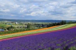 Campo de flor colorido imagem de stock royalty free