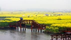 Campo de flor colorido de la violación en la lluvia, Jiangsu, China Foto de archivo