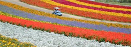 Campo de flor colorido no Hokkaido Fotografia de Stock