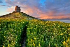 Campo de flor da mola com a fuga para fortificar a torre Fotografia de Stock Royalty Free