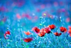 Campo de flor da papoila na noite Fotografia de Stock Royalty Free