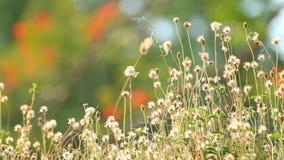 Campo de flor de la hierba almacen de video