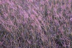 Campo de flor de la hierba imagenes de archivo
