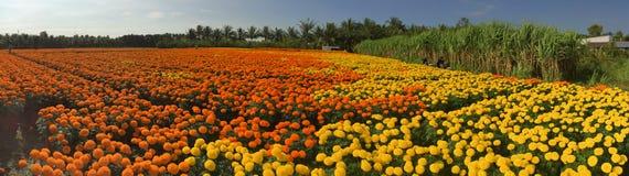 Campo de flor de la margarita Fotos de archivo