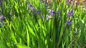 Campo de flor de la primavera almacen de metraje de vídeo