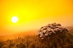 Campo de flor de la puesta del sol Fotos de archivo