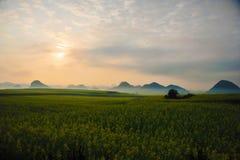 Campo de flor del col, China Imágenes de archivo libres de regalías
