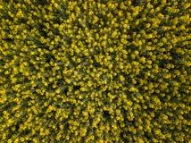 Campo de flor do Canola na mola, Luoping, China Imagens de Stock Royalty Free