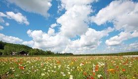 Campo de flor do Hokkaido Imagem de Stock