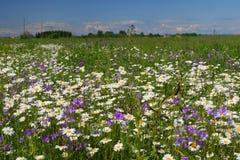 Campo de flor do verão fotos de stock royalty free