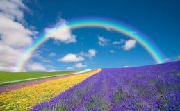 Campo de flor e céu azul com nuvens. ilustração do vetor
