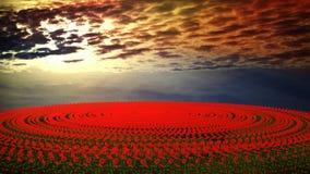 Campo de flor en la puesta del sol Imagen de archivo libre de regalías