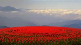 Campo de flor en la puesta del sol Imágenes de archivo libres de regalías