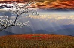 Campo de flor en la puesta del sol Fotografía de archivo libre de regalías