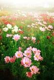 Campo de flor hermoso Imágenes de archivo libres de regalías