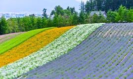 Campo de flor hermoso con colores del arco iris imagen de archivo